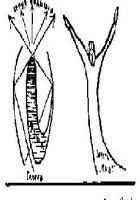 Глоссолалия