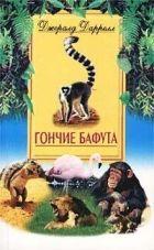 Гончие Бафута